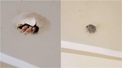 Mulher descobre que algo vivia no teto de sua casa e ela nem fazia ideia. (Foto: Arquivo Pessoal/Sabrina Raven)