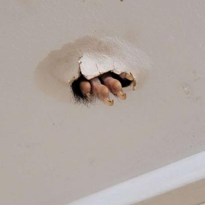 Para aumentar ainda mais a curiosidade o animal colocava a sua pata no buraco. (Foto: Arquivo Pessoal/Sabrina Raven)