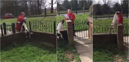 Cachorro é filmado comemorando entusiasmado a chegada do carteiro em sua casa. (Foto: Reprodução Youtube/ViralHog)