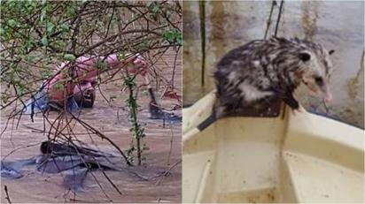 Homem enfrenta inundação repentina para salvar animais selvagens que estavam se afogando. (Foto: Arquivo Pessoal/Frankie Williams)