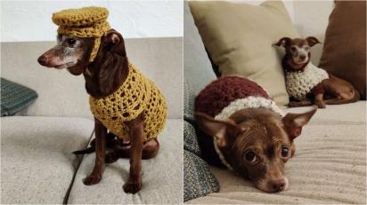 Homem acolhe cão idoso e decide tricotar roupinhas para ele não passar frio no inverno. (Foto: Arquivo Pessoal/Nick Greatens)