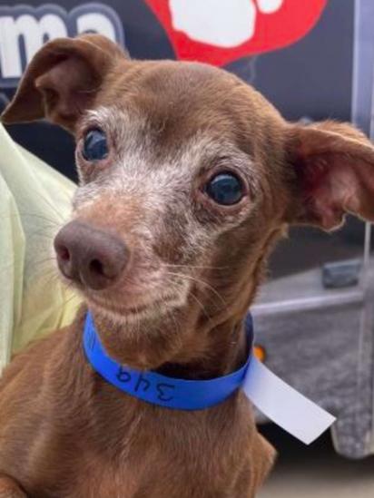 Os cães foram adotados no abrigo de animais Ruff Start Rescue. (Foto: Reprodução/Ruff Start Rescue)
