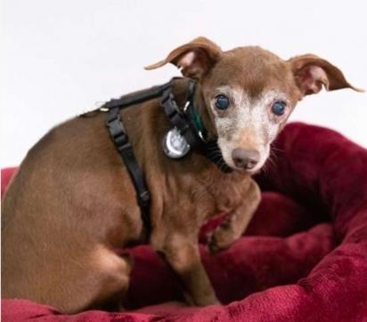 Os dois cachorros quando adotados não confiavam em seus novos donos. (Foto: Reprodução/Ruff Start Rescue)