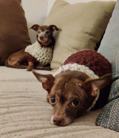 O hobbie de Nick Greatens é tricotar roupinhas para os seus cães. (Foto: Arquivo Pessoal/Nick Greatens)