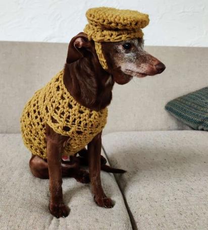 Os cães aprovaram o suéter, mas o chapéu não caiu no agrado deles. (Foto: Arquivo Pessoal/Nick Greatens)