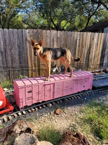Os cães podem se divertir no pátio de casa em uma ferrovia de 300 metros.
