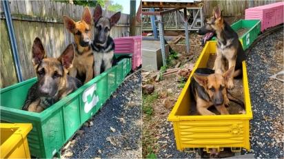 Cãezinhos decidem estrear 'invenção' mirabolante do pai e vídeo viraliza.