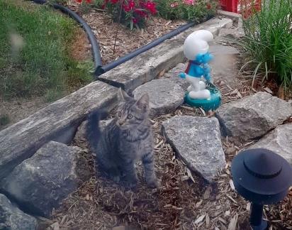 O gatinho apareceu no jardim de uma família que o resgatou e lhe encaminhou para o abrigo de animais.