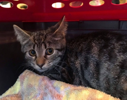 O gatinho Alvin foi encontrado em péssimas condições e tinha medo de quem se aproximava.
