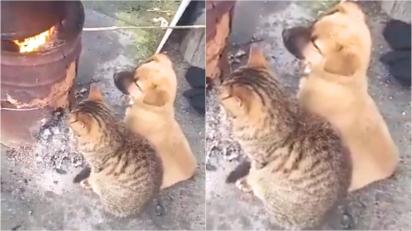 Duplinha de amigos decide se aquecer próximo a fogueira para afugentar o frio.
