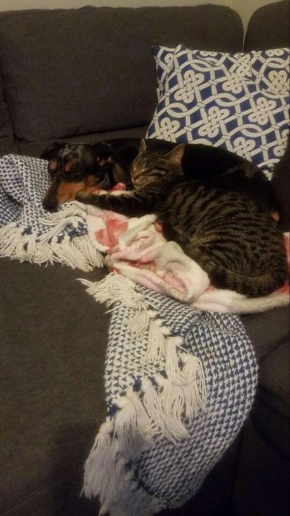 O cachorrinho adora estar por perto dos donos e até do gatinho da família.