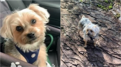 Cachorro que adora carteiro salva a sua vida em momento impensável.