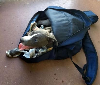 O filhote foi encontrado preso em uma mochila dentro da caçamba do veículo de Jerry Murray.