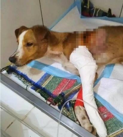 Uma protetora de animais em Araucária soube do caso e foi imediatamente socorrer o cachorro.
