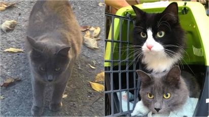 Gatinha leva irmã felina para conhecer mulher que a alimentou e foi gentil com ela.