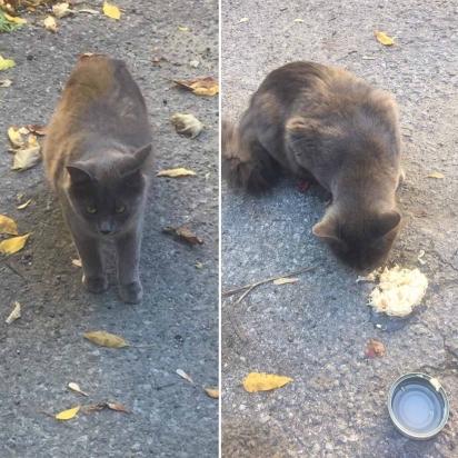 A gatinha foi encontrada por uma voluntária de abrigo de animais que imediatamente parou e a alimentou.