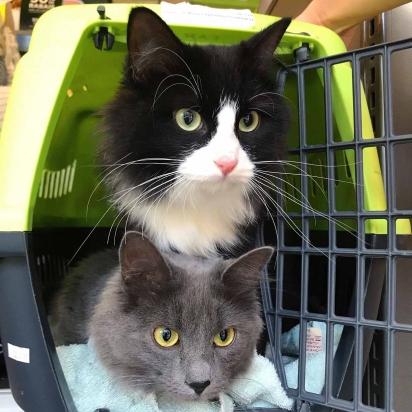 As duas irmãs são muito unidas. E estão prontas para serem adotadas.