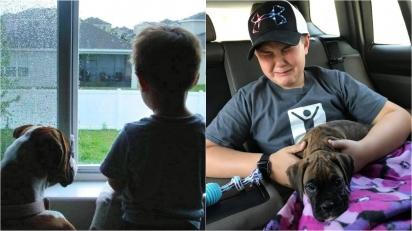 Garotinho se emociona ao ganhar nova filhote de boxer depois de ter perdido o seu cão de câncer.