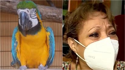 Família pode perder a guarda de papagaio arara que vive com eles há 10 anos depois de denúncia.