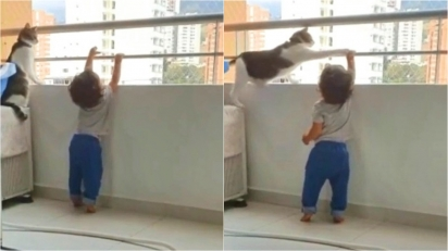Gato cuidador não deixa bebê subir em janela e encanta TikTok.