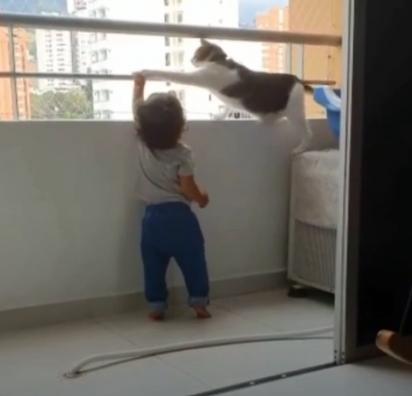A cena fofa do gatinho impedindo a criança de se apoiar na janela comoveu os internautas.