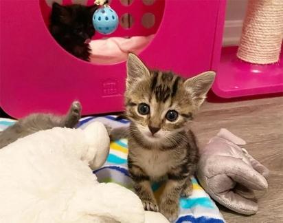 A pequena sempre curiosa e carinhosa com os voluntários, principalmente com a Penny.