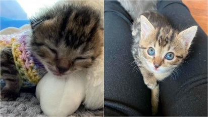 Menor gatinha de ninhada passa o dia no colo de voluntária.