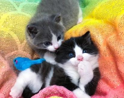 Desde que foram resgatados os gatinhos não se separaram.