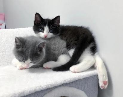 A única exigência para adoção dos gatinhos é que ambos fossem adotados juntos.