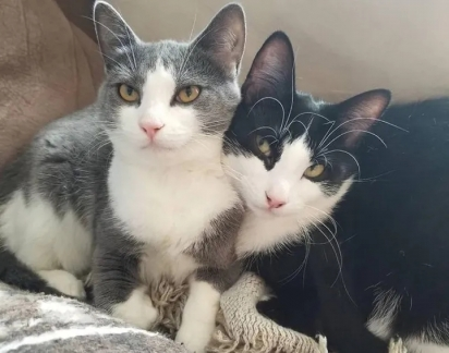 Felizmente os gatinhos foram adotados juntos e agora vivem num lar amoroso.
