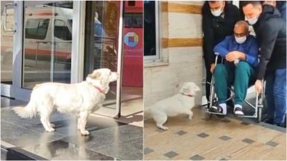 Cadelinha segue ambulância que levava o seu dono e espera na entrada de hospital por seis dias até ele receber alta.