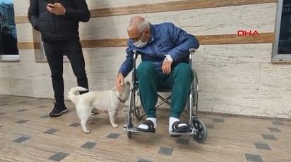 O cão de nove anos esperava por seu dono, Cemal Senturk, enquanto ele estava no hospital.
