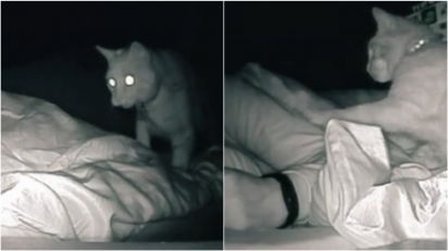 Acordando sempre cansada, mulher instala câmera e descobre que o seu gato a cutuca a noite inteira tentando acordá-la.