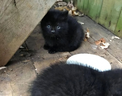 Os gatinhos apareceram no jardim da casa na estação mais fria do ano, por sorte a família era bondosa e os resgataram.