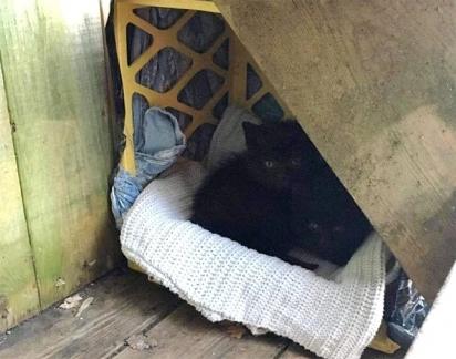 A mulher preparou uma caixinha com alguns cobertores para que os filhotes pudessem se abrigar do frio.