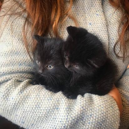 Por sorte os gatinhos com seis semanas de vida foram resgatados, eles não aguentariam passar sozinhos pelo extremo inverno canadense.