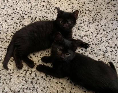 Os dois gatinhos estão sempre por perto um do outro.