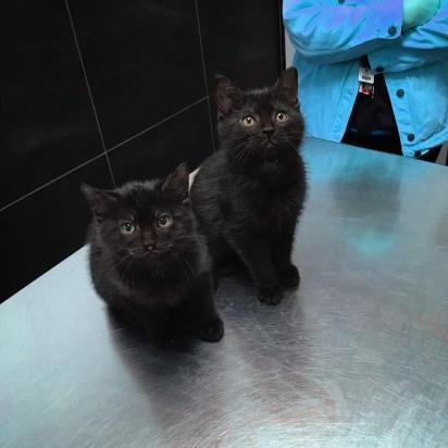 Ambos aguardam serem adotados por uma família definitiva.