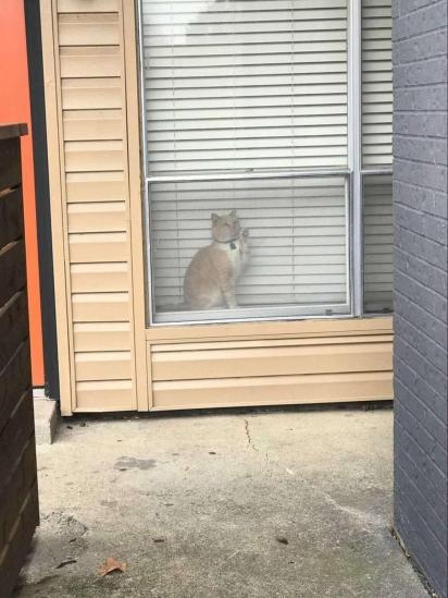Em uma de suas visitas George acabou ficando preso por mais de 5 horas na casa do vizinho.