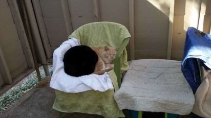 O gatinho George é muito amado pela vizinhança e aproveita o seu carisma para dar uma volta na casa dos vizinhos.