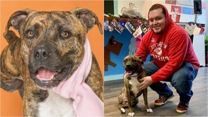 Dono reencontra a sua cadela em abrigo 10 meses depois do seu desaparecimento.