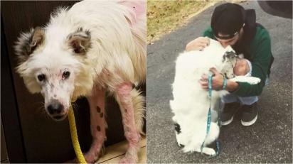 Cão border collie tão negligenciado que sentia dor ao ganhar carinho é adotado e agora só quer abraços.