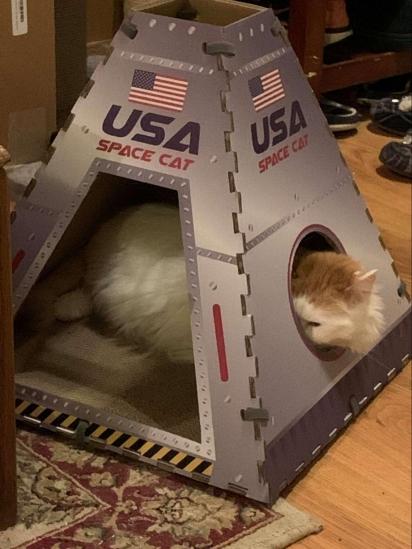 Para aliviar a tristeza da gatinha em não ter mais a árvore de Natal, Sara Taylor comprou uma cápsula espacial para que a felina possa se divertir.