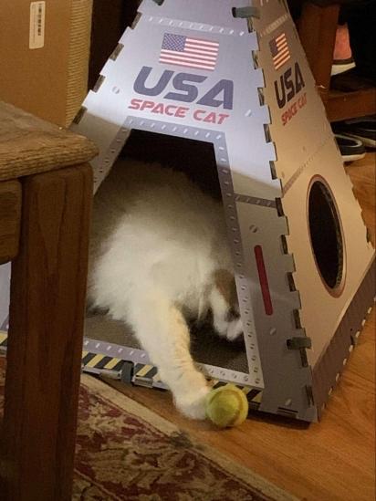 A gatinha aprovou a cápsula espacial. Ela adora se aninhar no seu novo brinquedo.