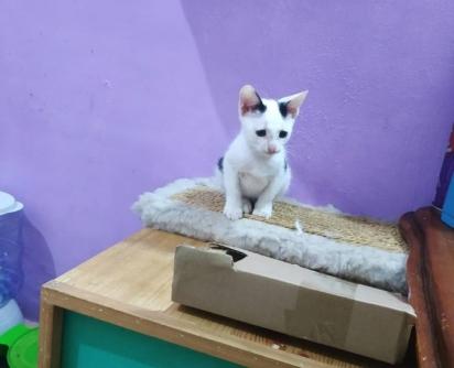 A voluntária Bella cuidou do gatinho até que ele se fortalecesse.
