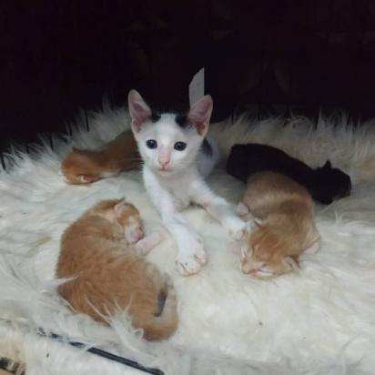 Logo que se recuperou o gatinho fez amizade com uma felina grávida e que não demorou muito para dar à luz.