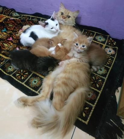 O gatinho Daniboi logo se inseriu no núcleo familiar dos felinos.