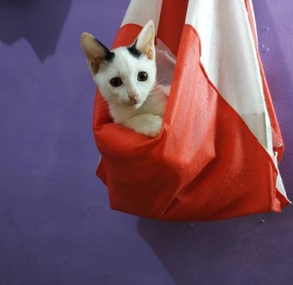 Daniboi foi adotado e agora vive em um lar amoroso e tem a companhia de uma irmã felina.