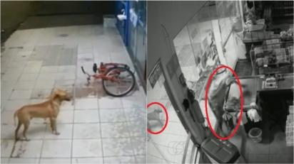 Sem querer, cachorrinho caramelo vira cúmplice de assaltante durante roubo em mercado no TO