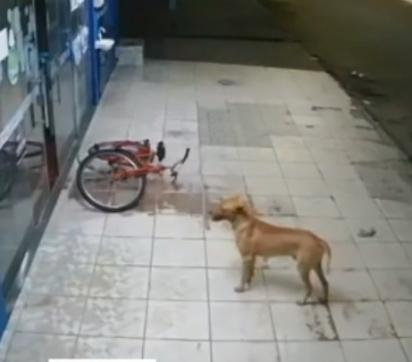O cachorrinho, sem fazer nada, fica do lado de fora do estabelecimento. Parece estar dando cobertura para o ladrão.
